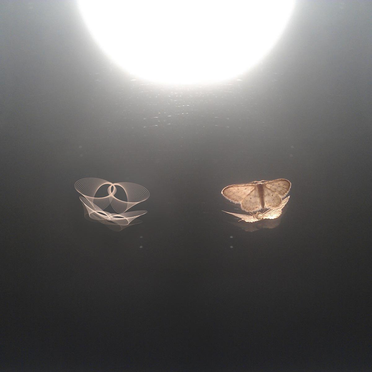 Nachtschwärmer